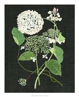 White Hydrangea Study I Fine Art Print