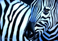 That Zebra Look Fine Art Print