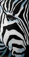 Zebra Long Face Fine Art Print