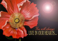 Bereavement Poppy Fine Art Print