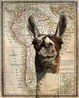 South America Llama Map Framed Print
