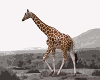Pop of Color Lone Giraffe Fine Art Print