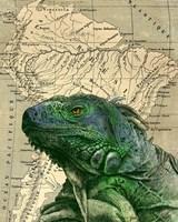 Brazilian Iguana Fine Art Print