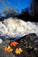 Maple Leaves and Wadleigh Falls on the Lamprey River, New Hampshire Fine Art Print