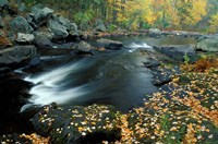 Autumn Leaves at Packers Falls on the Lamprey River, New Hampshire Fine Art Print