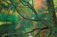 Fall on the Lamprey River below Wiswall Dam, New Hampshire Fine Art Print
