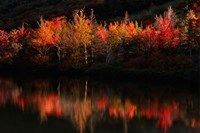 Fall Foliage with Reflections, New Hampshire Fine Art Print