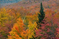 Autumn at Flume Area, Franconia Notch State Park, New Hampshire Fine Art Print