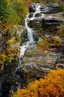 Autumn at Silver Cascade, Crawford Notch SP, New Hampshire Fine Art Print