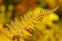 New Hampshire, Fern frond flora Fine Art Print