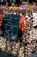 Ropes of Garlic in Local Shop, Nice, France Fine Art Print