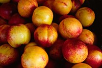 Plums at an Outdoor Market, Nice, France Fine Art Print