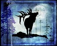 Midnight Elk Fine Art Print