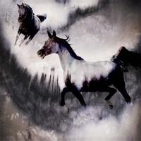 Black Mare - Dream 3 Fine Art Print