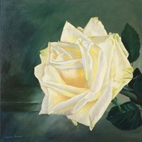A Rose is a Rose 1 Fine Art Print