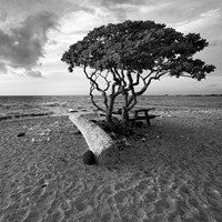 Hawaiian Tree Fine Art Print