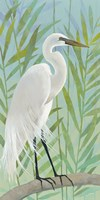 Egret by the Shore I Fine Art Print