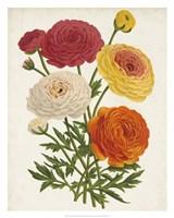 Vintage Garden Beauties II Fine Art Print