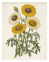 Vintage Garden Beauties III Fine Art Print