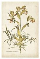 Elegant Botanical II Fine Art Print