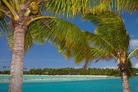Palm trees and lagoon entrance, Musket Cove Island Resort, Malolo Lailai Island, Mamanuca Islands, Fiji Fine Art Print