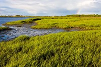 Salt Marsh side of Long Beach,  Stratford, Connecticut Fine Art Print