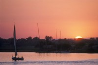 Traditional Egyptian Falucca, Nile River, Luxor, Egypt Fine Art Print