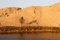 Palm Tree on the Bank of the Nile River, Egypt Fine Art Print