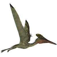 Pterodactylus Flying Reptile Fine Art Print