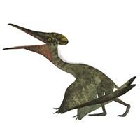 Flying Pterodactylus  Reptile Fine Art Print