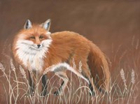 Red Fox Fine Art Print