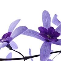 Purple Blossom 2 Fine Art Print