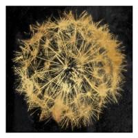 Rich Gold Dandelion Fine Art Print