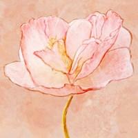 Sweet Peach Poppy III Fine Art Print