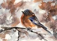 Robin on Branch Fine Art Print