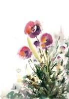 Pansy Patch Fine Art Print