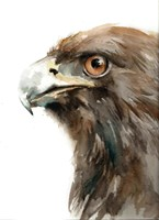 Bird of Prey Fine Art Print