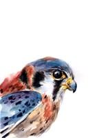 Bird of Prey II Fine Art Print