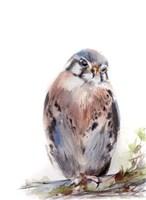 Bird of Prey III Fine Art Print