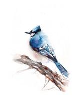 Blue Jay Fine Art Print