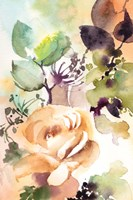 Rosy Rose II Fine Art Print