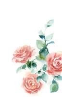 Peachy Petals Fine Art Print