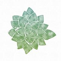 Green Succulent Fine Art Print