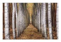 Tree Farm Fine Art Print