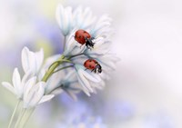 Ladybirds Fine Art Print