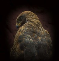 Somebody Watch Me-Savanna Hawk Fine Art Print