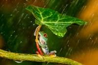Ohh Noo It's Raining Fine Art Print
