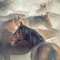 Tired Horses Fine Art Print