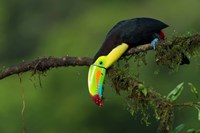 The Colors Of Costa Rica Fine Art Print
