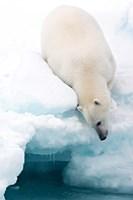 Arctic Composition Fine Art Print